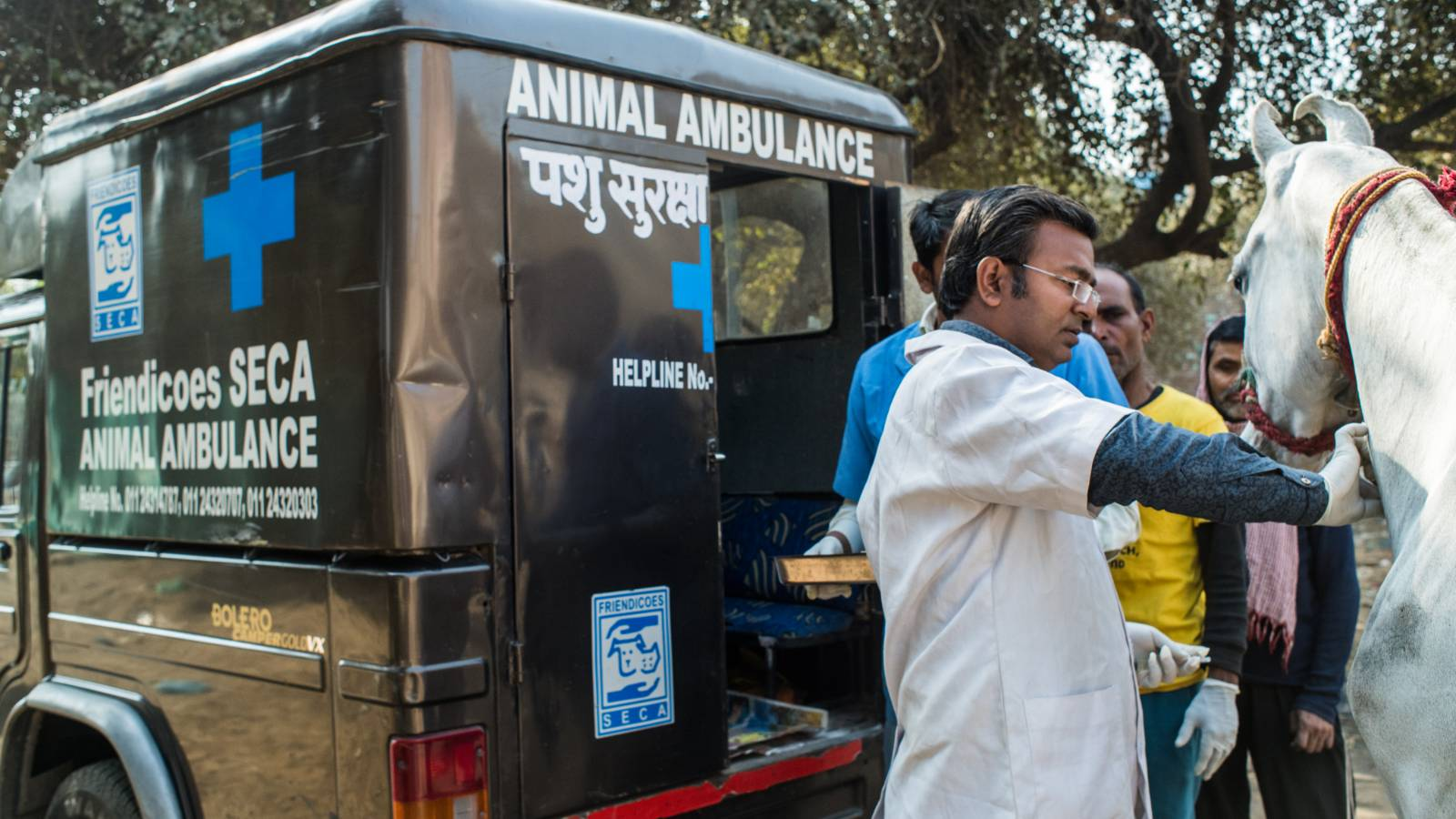 Working equines being treated for free by our Mobile Equine Clinic Team