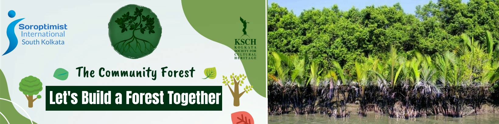 The Mangrove Community Forest in Collaboration With SISK