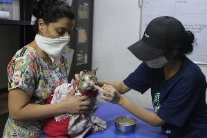 Help us provide medical care to vulnerable stray animals