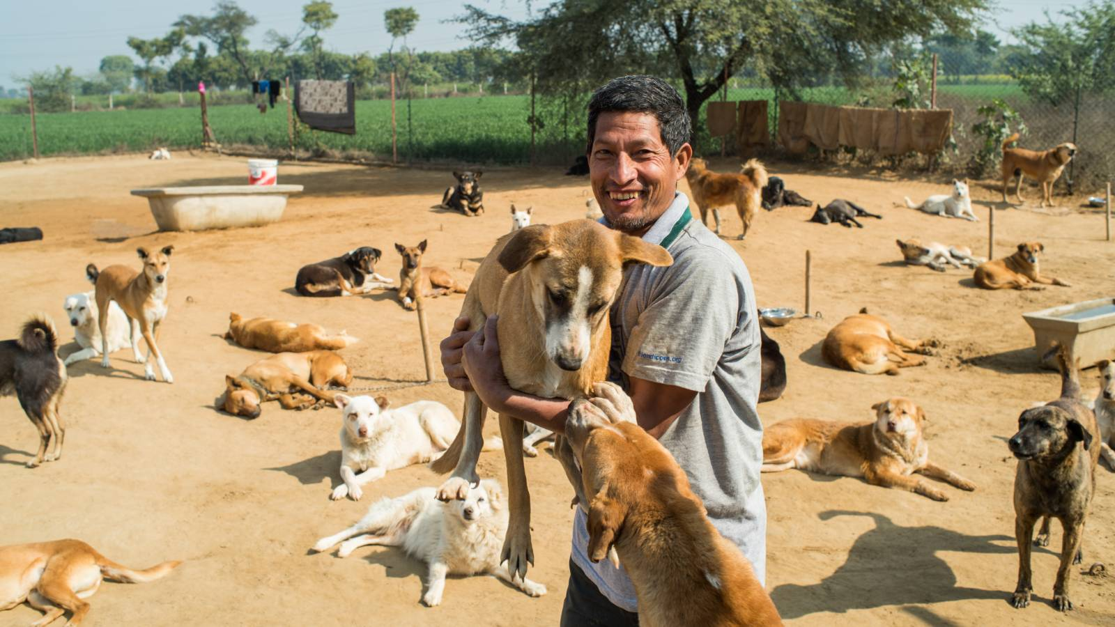 Dog section at Lifetime Care Sanctuary in Gurgaon