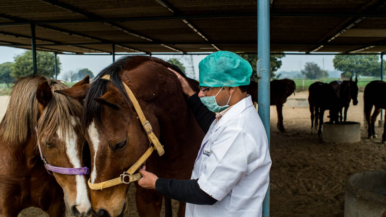 Equines being examined at our Lifetime Care Sanctuary in Gurgaon