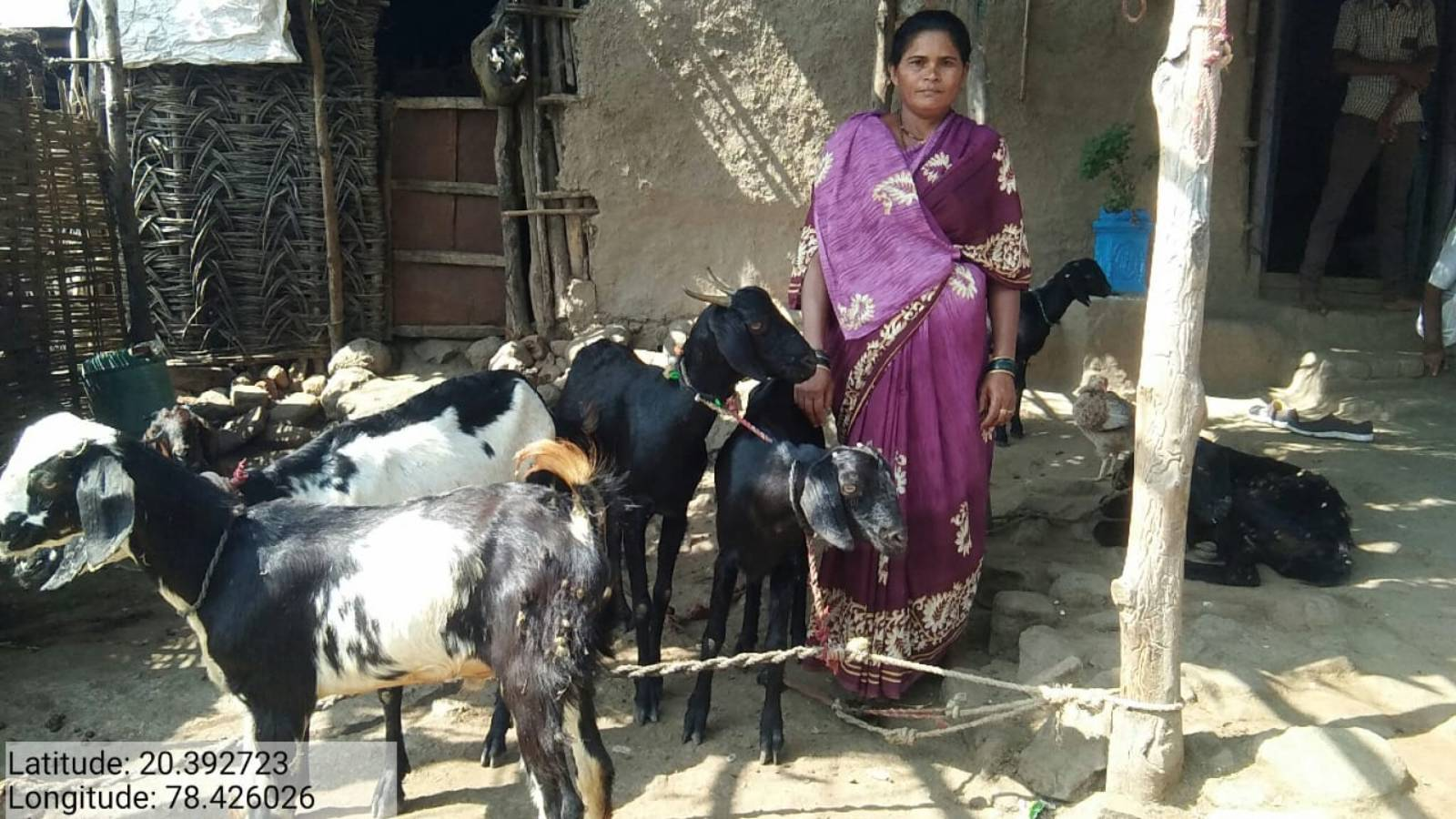 1000 Goats provided to increase income source of SHG women's