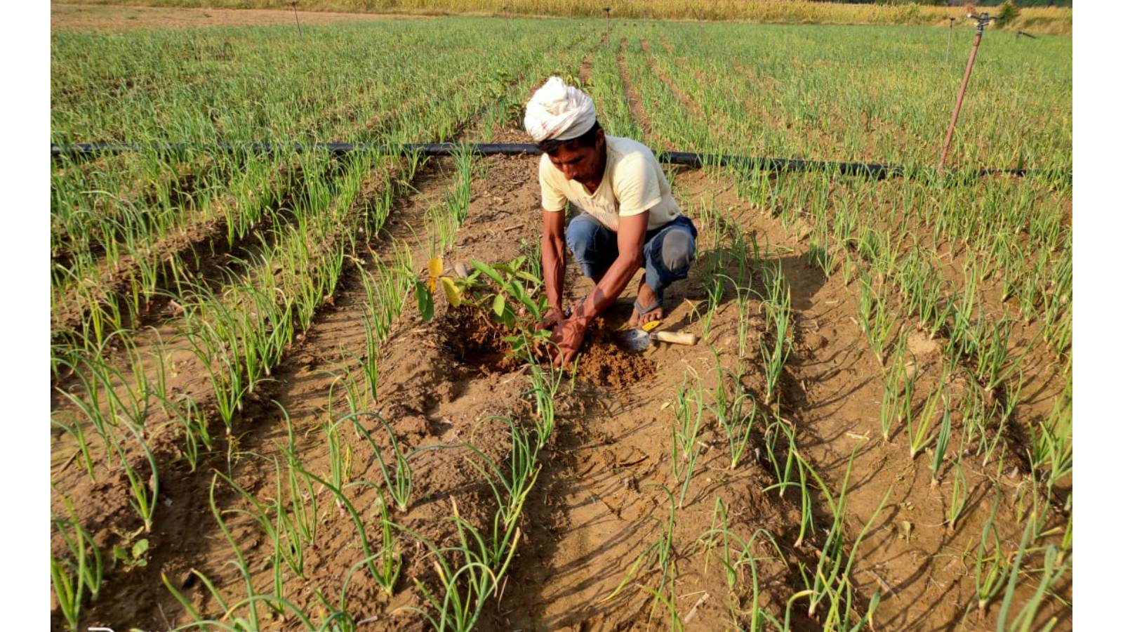 Train and prepare farmers for climate resilient farming