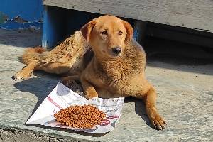 Help voiceless animals when they're in need of food, shelter or life-saving medical treatment.