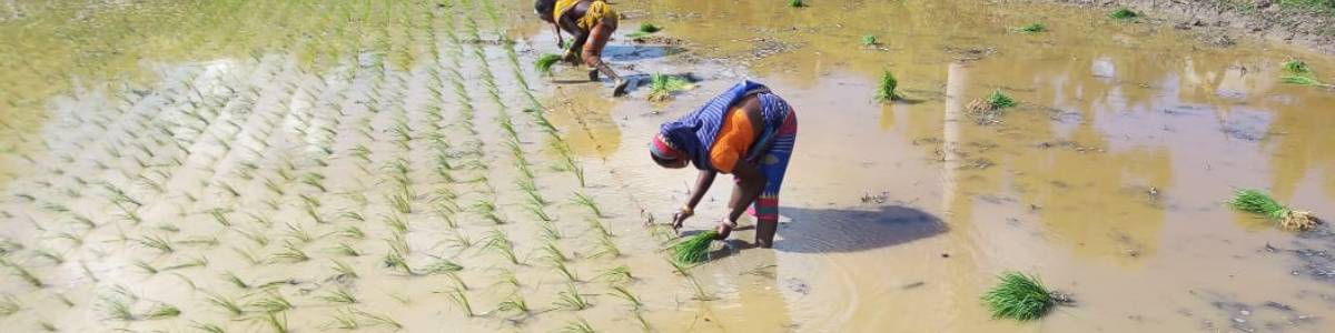 Rebuilding Livelihoods of Migrants and Small Farmers