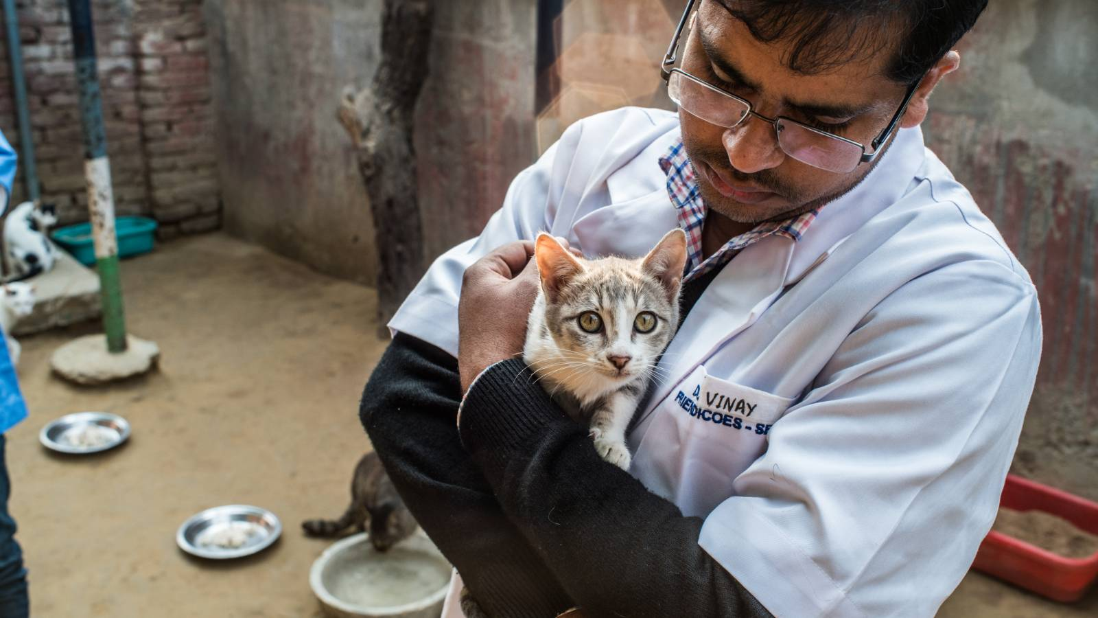 Tender moment between our vet and an injured cat