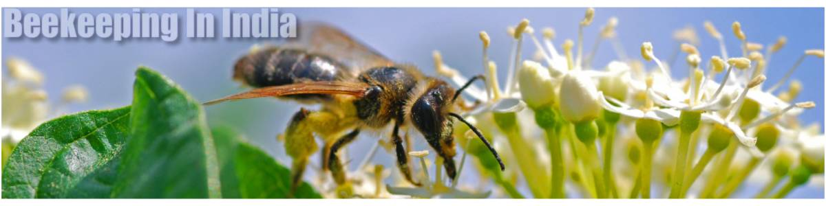 Help farmer with Beekeeping to increase personal and agricultural income
