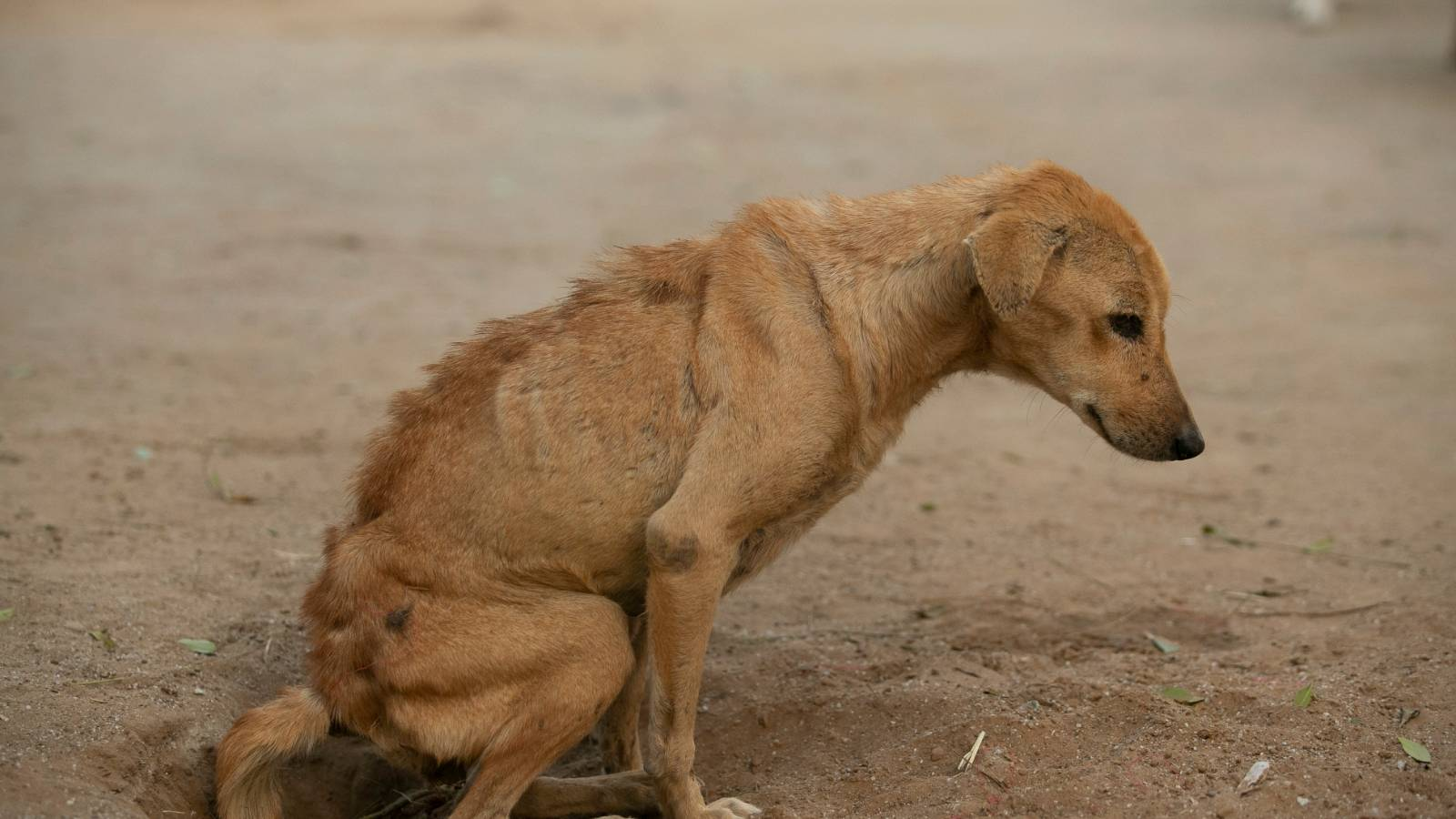 Malnutrition in strays