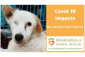 Street Animals Impacted by Covid