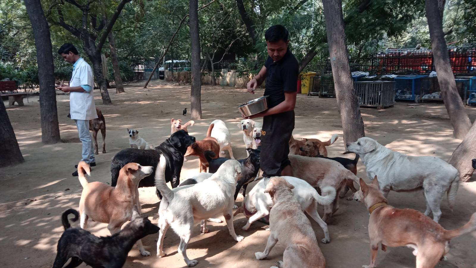 Feeding time at our Defence Colony Shelter and Clinic